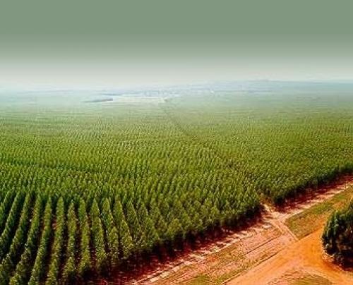 Instalación de riego y monocable para cultivos energéticos